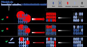 Principio de inmunidad colectiva